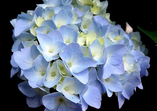 True Blue by Rusty Katchmer