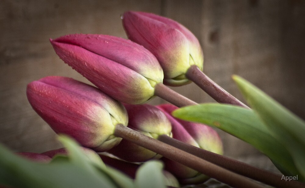 Gathered Tulips by Appel