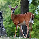 What a Poser by Susan Blevins