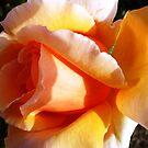 Peach Petals - Just Joey - Spring 2009 by EdsMum