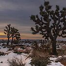 Joshua Tree Winter Sunrise and Snow by photosbyflood