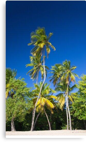 Coconut Palms on Tropical Island by cinema4design