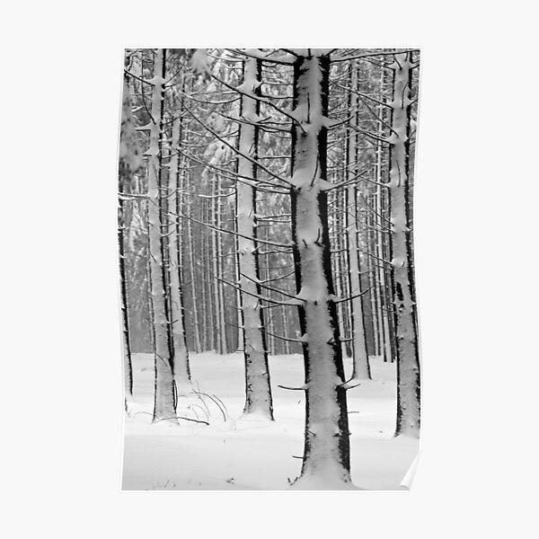 Forêt en hiver Poster