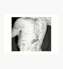 Body Maps - Body - Back Art Print