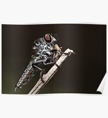 Robberfly with lunch Poster