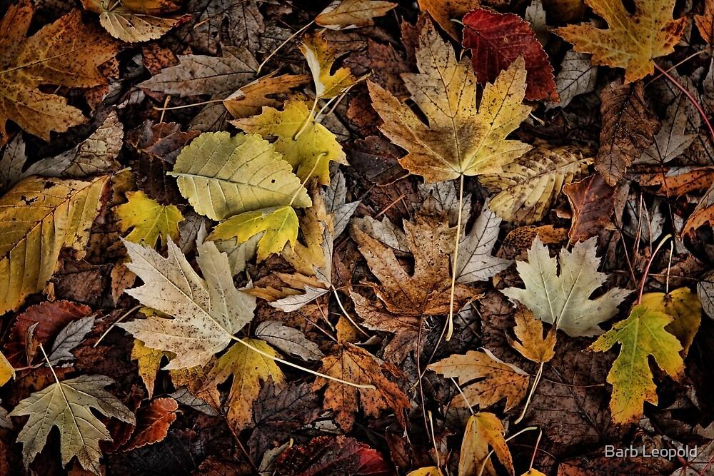 Autumn Colours by Barb Leopold
