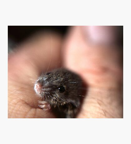 A baby mouse twitching his nose. Photographic Print