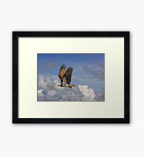 Fly By! Framed Print