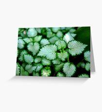 Silver Leaves - Rancho Cucamonga, CA Greeting Card