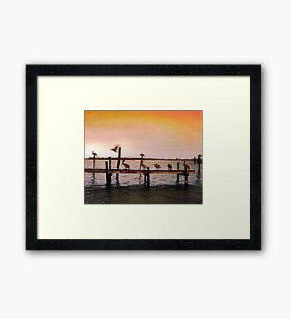 Pelicans on Pier - North Carolina Framed Print