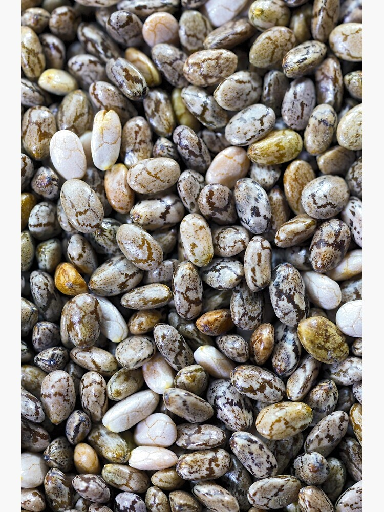 Black Chia seeds by fardad