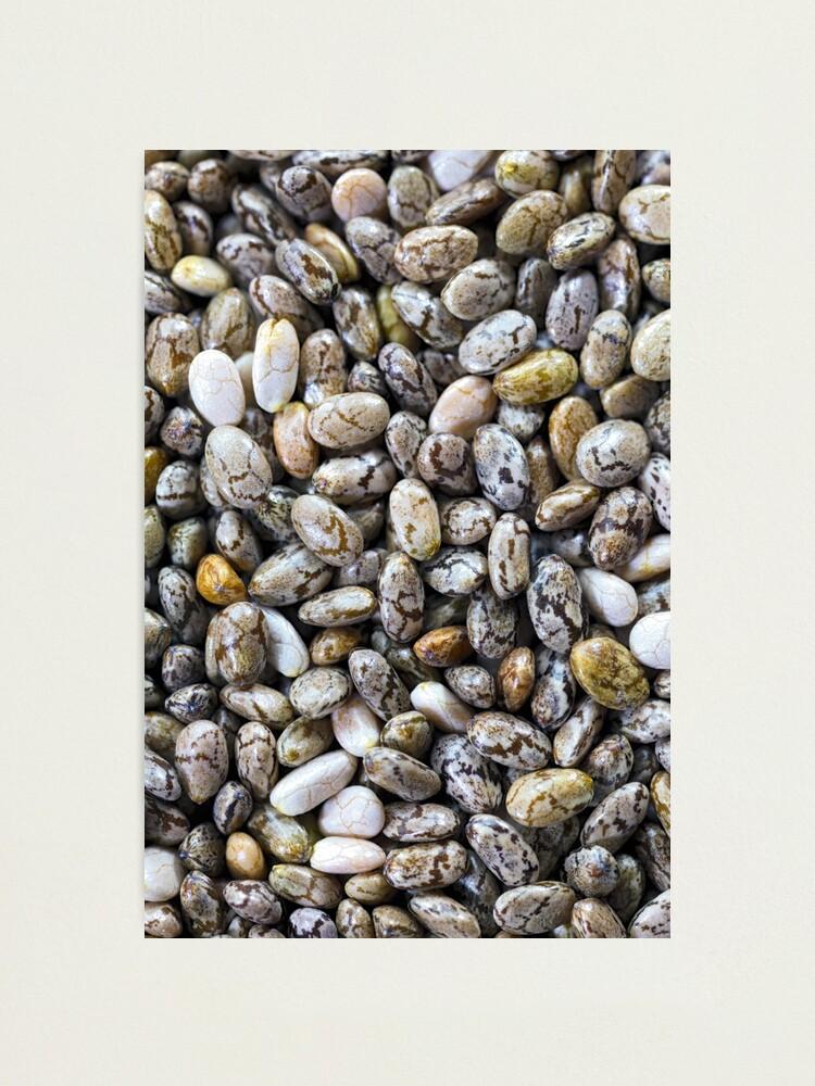 Alternate view of Black Chia seeds Photographic Print