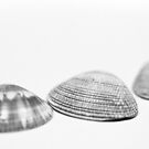 Shell Trio by Hege Nolan