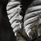 Skeletal Leaves by Sam Mortimer