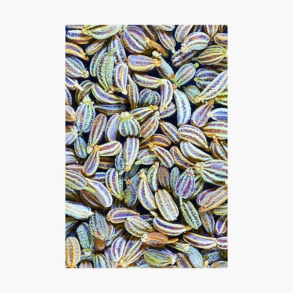 Carom seeds, macro Photographic Print