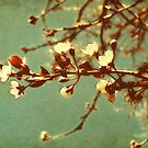 Blossoming by Nikki Smith