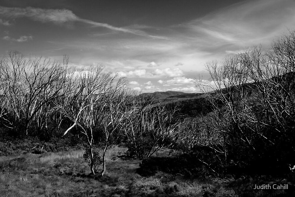 Mt Hotham by Judith Cahill
