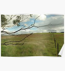 Out and about, in the paddocks near Tidbinbilla Poster