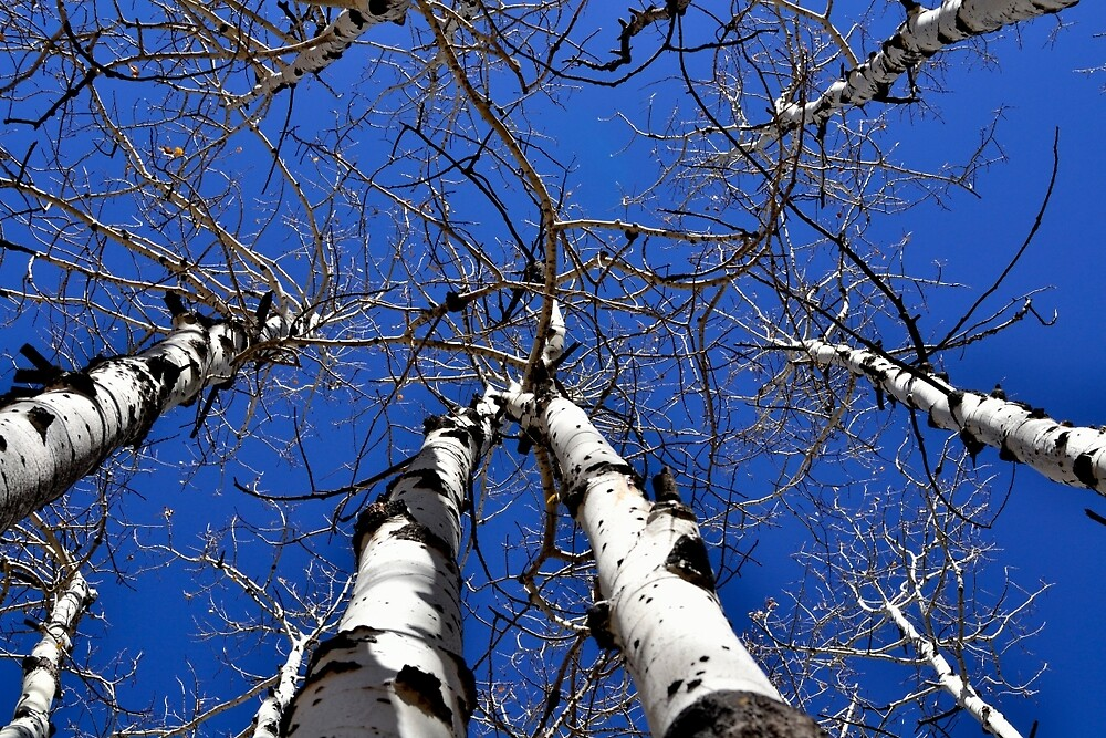 Thru the Trees by RenaeSoleil