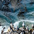 Cormorants under  Spooky sea weed  by john  Lenagan