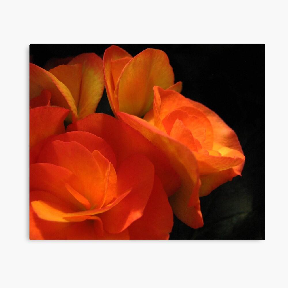 Begonias Leinwanddruck