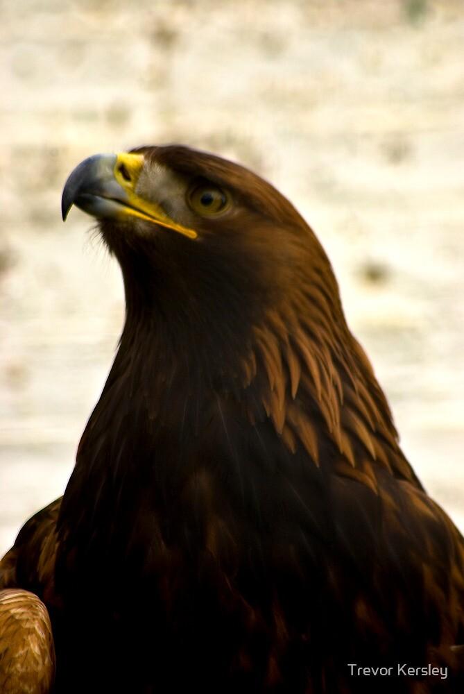 Golden Eagle #1 by Trevor Kersley