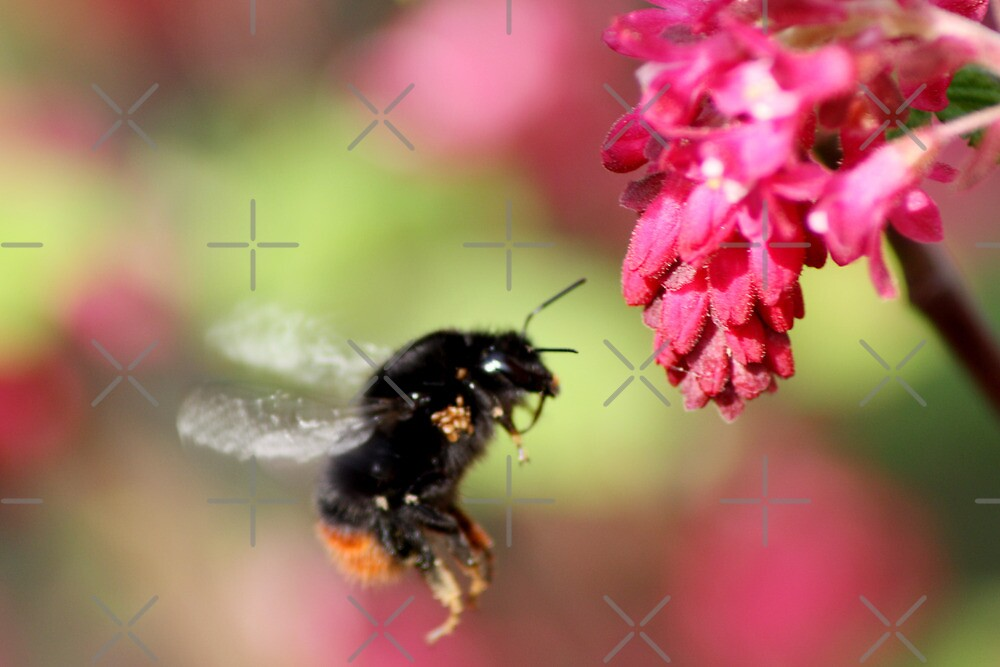 Busy Bee by Gemma  Simpson