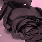Love is... by Lozzar Flowers & Art