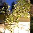 In the lights of garden... by binoculars