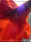 Sunburst on amaryllis by © Pauline Wherrell