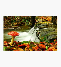 Fall Season Photographic Print