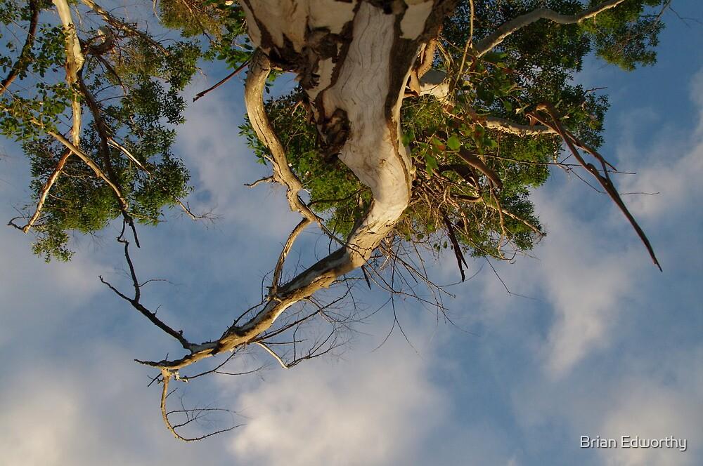 Topsy turvy tree by Brian Edworthy