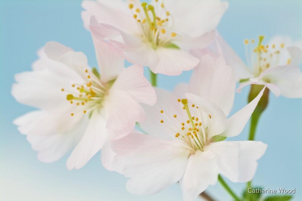 Prunus Mikinori by Catherine Wood