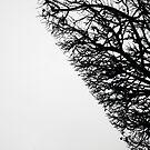 « Arboressence#10 » par Xavier Gavaud