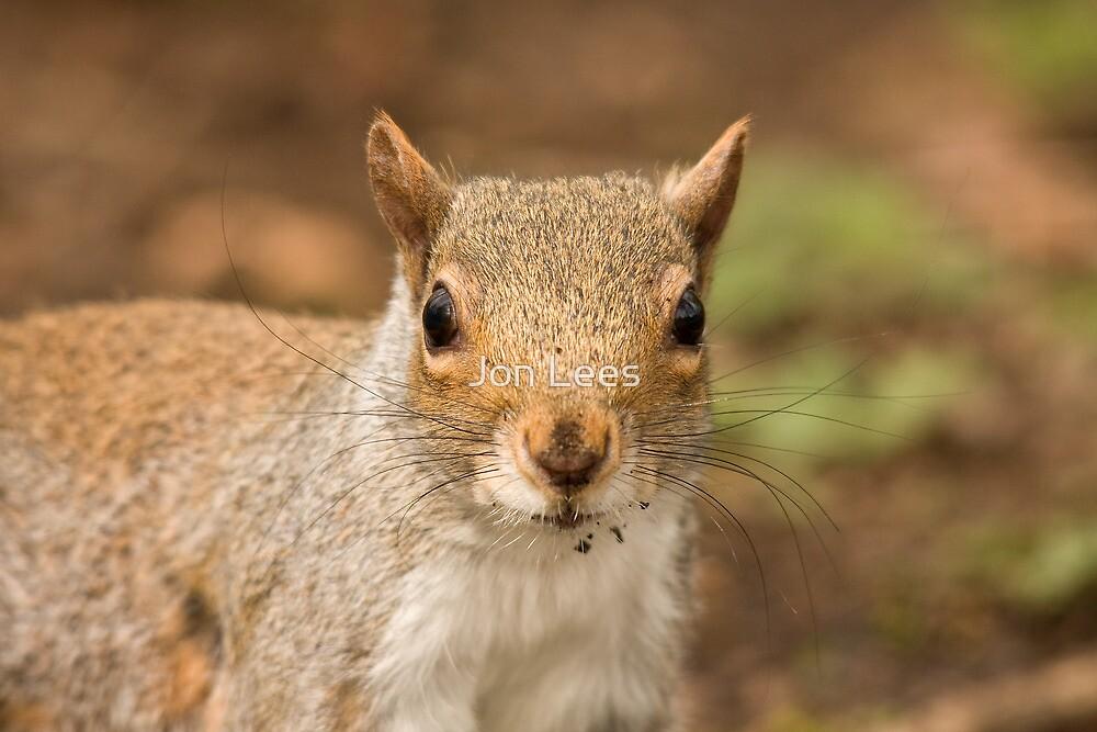 Grey squirrel juvenile by Jon Lees