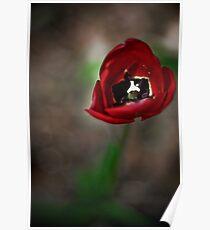 April's Bloom Poster