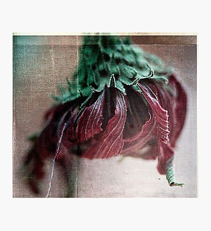 fading away~ Photographic Print