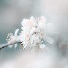 dreamy spring by ALEX GRICHENKO