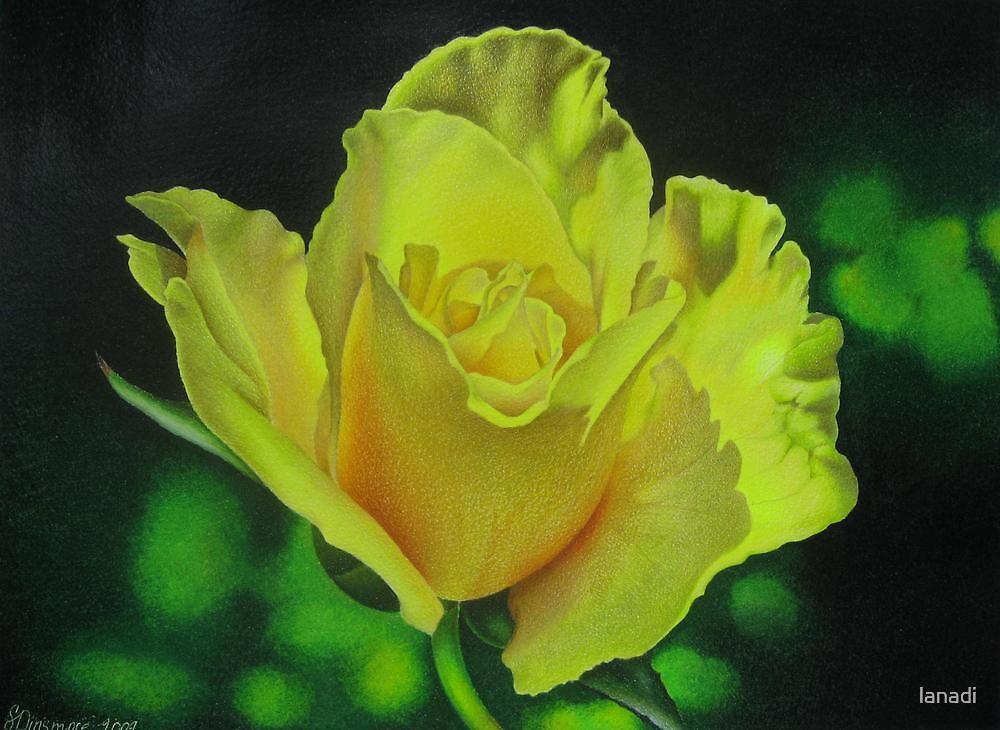 Yellow Rose - Midas Touch by lanadi