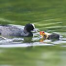Feeding Babies by davesphotographics
