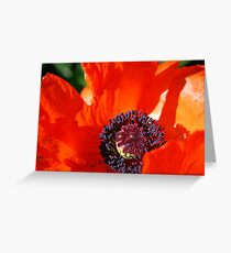 Adventures in Poppyland Greeting Card
