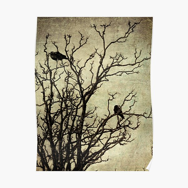 Rustic Crows Black Birds Tree Modern Cottage Chic Art Matted Picture USA A465a Poster