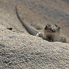 The Little Lizard by Michael Skeard