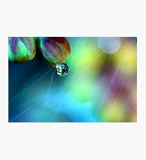 Rainbow Web Photographic Print