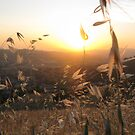 Foxtail Sunset by Jennifer  Gaillard