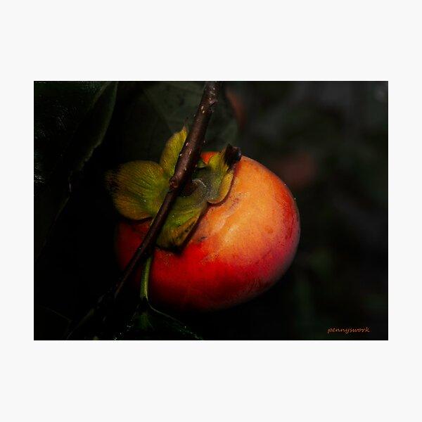Persimmon Photographic Print