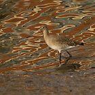 Black-tailed godwit by Jon Lees