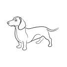 Dachshund Line Drawing by Adam Regester