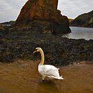 Swan In The Sea by Gary Buchan