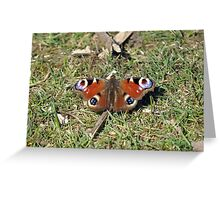 Peacock Butterfly on Grass Greeting Card